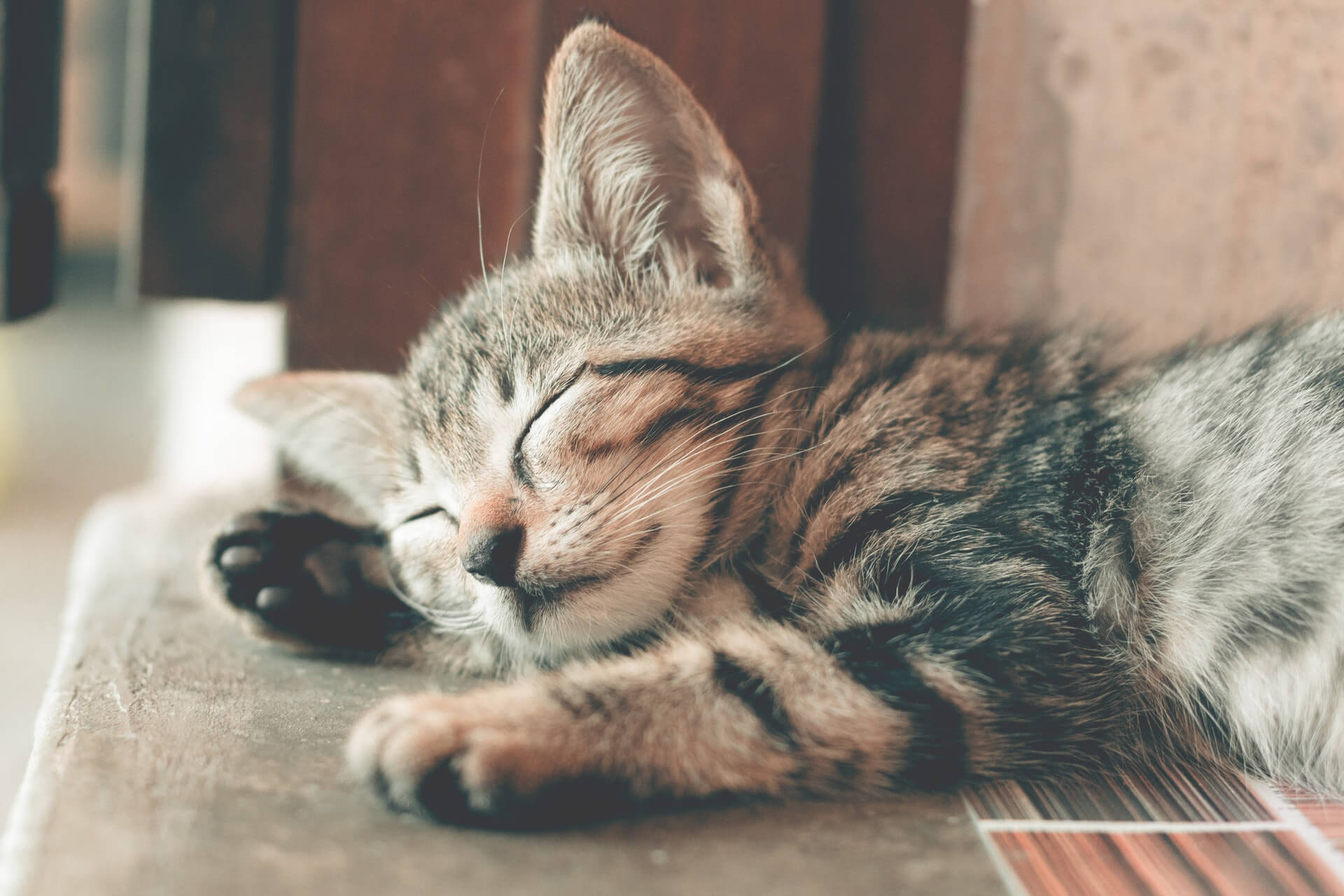 Why You Should Consider Getting Cat Insurance Scratch Patch