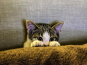Cat behind sofa
