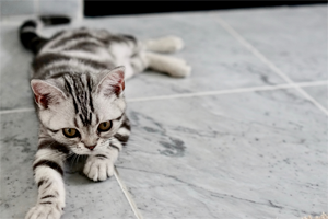 Scratch&patch-cat-personality