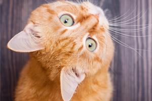 Scratch&Patch-cat